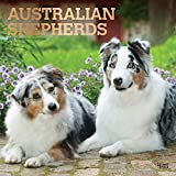 Australian Shepherds - Australische Schäferhunde 2021- 16-Monatskalender mit freier DogDays-App: Original BrownTrout-Kalender [Mehrsprachig] [Kalender] (Wall-Kalender)