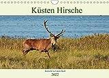 Küsten Hirsche - Rotwild auf dem Darß (Wandkalender 2022 DIN A4 quer)