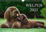 Welpen 2021 (Wandkalender 2021 DIN A4 quer)