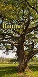 Bäume Kalender 2021, Wandkalender im Hochformat (33x66 cm) - Landschaftskalender / Naturkalender