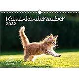Katzenkinderzauber DIN A3 Kalender für 2022 Katzenkinder Katzenbabys - Seelenzauber