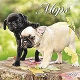 Mops 2021: Broschürenkalender mit Ferienterminen. Hunde-Kalender. 30 x 30 cm