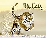 Big Cats 2021: Großer Wandkalender. Foto-Kunstkalender mit eindruckvollen Aufnahmen von Raubkatzen. Querformat 55 x 45,5 cm.