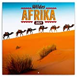 Wildes Afrika Wandkalender 2021 Kalender, Broschürenkalender mit Monatskalendarium, Broschurkalender Tierkalender 30 x 30 cm (30x60 Geöffnet)