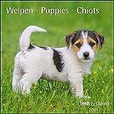 Welpen Puppies 2021 - Broschürenkalender - Wandkalender - mit herausnehmbarem Poster - Format 30 x 30 cm