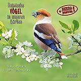 Heimische Vögel 2022: Kalender 2022 (Artwork Media)