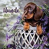 Trötsch Broschürenkalender Hunde 2022: Wandplaner Tierkalender