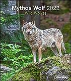 Mythos Wolf 2022 - Foto-Kalender - Wand-Kalender - 30x34: Wild Wolves