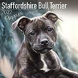 Staffordshire Bullterrier Welpen-Kalender 2022 – Hunderassenkalender – Wandkalender 2021–2022
