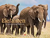 Elefanten - die sanften Riesen Afrikas Kalender 2021, Wandkalender im Querformat (54x42 cm) - Tierkalender
