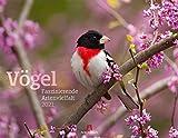 Vögel - Faszinierende Artenvielfalt Kalender 2021, Wandkalender im Querformat (54x42 cm) - Tierkalender / Vogelkalender nicht nur für Ornithologen