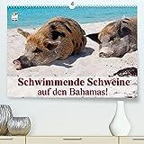 Schwimmende Schweine auf den Bahamas! (Premium, hochwertiger DIN A2 Wandkalender 2022, Kunstdruck in Hochglanz)