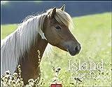 Islandpferde Kalender 2021