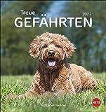Hunde - Treue Gefährten Postkartenkalender 2022 - Tierkalender mit perforierten Postkarten - zum Aufstellen und Aufhängen - mit Monatskalendarium - 16 x 17 cm