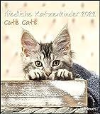Niedliche Katzenkinder 2022 - Wand-Kalender - Tier-Kalender - 30x34: Cute Cats