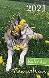 Kalender Tamaskan 2021: Hundekalender