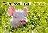 Schweine 2022: Der sympathische Schweine-Kalender mit den charmanten Namen