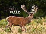 Tierwelt Wald Kalender 2022, Wandkalender im Querformat (45x33 cm) - Tierkalender mit heimischen Wildtieren