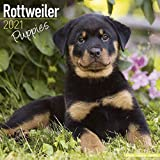 Rottweiler Puppies – Rottweiler Welpen 2021: Original Avonside-Kalender [Mehrsprachig] [Kalender] (Wall-Kalender)