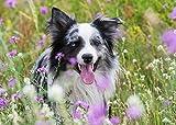 Edition Seidel Hunde Premium Kalender 2021 DIN A3 Wandkalender Hundekalender
