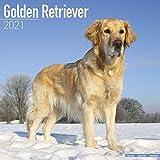 Kalender 2021 Golden Retriever mit Weihnachtskarte