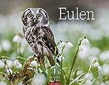 Eulen Kalender 2021