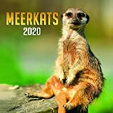 Presco - Wandkalender Meerkats 2020, 30 × 30 cm