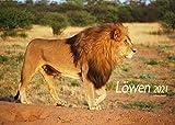 Edition Seidel Löwen Premium Kalender 2021 DIN A3 Wandkalender Tiere Afrika Löwe