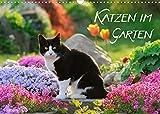 Katzen im Garten (Wandkalender 2022 DIN A3 quer)
