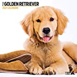 Golden Retriever 2021 Kalender Modern