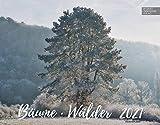 Bäume-Wälder Kalender 2021 | Wandkalender Bäume-Wälder/Deutschland im Großformat (58 x 45,5 cm): Großformat-Kalender 58 x 45,5 cm