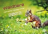 Waldtiere - Heimische Waldbewohner - Der Tierkalender - 2022 - Kalender DIN A2