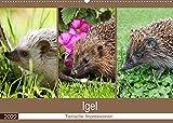 Igel 2022. Tierische Impressionen (Wandkalender 2022 DIN A2 quer)