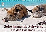 Schwimmende Schweine auf den Bahamas! (Wandkalender 2022 DIN A2 quer)
