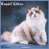Ragdoll Kitten 2021 Wall Calendar: Official Ragdoll Kitten Calendar 2021, 18 Months