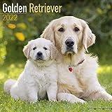 Golden Retriever 2022 - 16-Monatskalender: Original Avonside-Kalender [Mehrsprachig] [Kalender]: Original BrownTrout-Kalender [Mehrsprachig] [Kalender] (Wall-Kalender)
