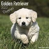 Golden Retriever Puppies - Golden Retriever-Welpen 2022 - 16-Monatskalender: Original Avonside-Kalender [Mehrsprachig] [Kalender]: Original ... [Mehrsprachig] [Kalender] (Wall-Kalender)
