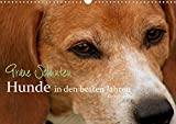 Graue Schnuten - Hunde in den besten Jahren (Wandkalender 2021 DIN A3 quer)