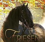Friesen 2022: Friesen Pferde
