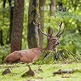 Wald und Flur 2022 - Broschürenkalender 30x30 cm (30x60 geöffnet) - Kalender mit Platz für Notizen - Forest Animals - Bildkalender - Wandkalender