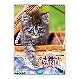 Trötsch Classickalender Liebste Katzen 2022: Wandkalender