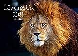 Edition Seidel Löwen & Co. Premium Kalender 2021 DIN A3 Wandkalender Tiere Afrika Löwen Tiger