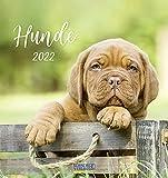 Hunde 2022: aufstellbarer Postkartenkalender