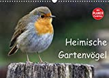 Heimische Gartenvögel (Wandkalender 2022 DIN A3 quer)