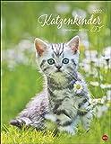 Katzenkinder Posterkalender 2022 von Monika Wegler - niedlicher Tier-Wandkalender mit vielen Fotos und lustigen Mini-Geschichten - mit Monatskalendarium - 34 x 44 cm