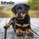 Rottweiler Puppies – Rottweiler Welpen 2022: Original Avonside-Kalender [Mehrsprachig] [Kalender] (Wall-Kalender)