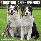 Just Australian Shepherds 2021 Calendar