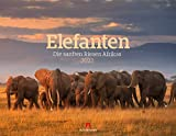 Elefanten - die sanften Riesen Afrikas Kalender 2022, Wandkalender im Querformat (54x42 cm) - Tierkalender
