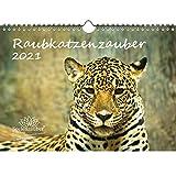 Raubkatzenzauber DIN A4 Kalender für 2021 verschiedene Raubkatzen - Seelenzauber