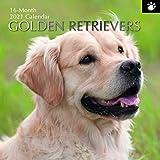 2021 Wandkalender - Golden Retriever Kalender, 30 x 30 Zentimeter Monatsansicht, 16-Monat, Hunde und Haustiere Thema, Enthalten 180 Aufkleber auf Englisch
